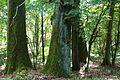 MOs810, WG 2014 48, powiat obornicki (rezerwat Welna) (6).JPG