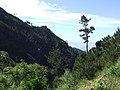 Madeira - Eira do Serrado (11773051863).jpg