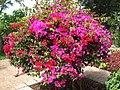 Madeira - Funchal - Jardim Botanico (2093610456).jpg