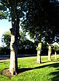 Magdalen Lane Trees in the Evening Sun - geograph.org.uk - 917023.jpg