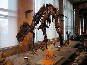 Maiasaura - Mounted skeleton