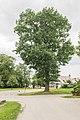 Maihingen Baumgruppe an der Mauchbrücke 001.jpg