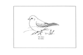 Manual of Bird Study 0053-19.png
