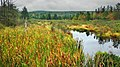 Marais du lac de Stoke - panoramio (1).jpg