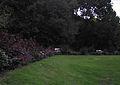 Margitszigeti fák alatt.jpg