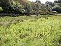 Marshy area, Chellow Dean, Allerton, Bradford - geograph.org.uk - 490000.jpg