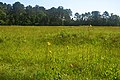 Marysee Prairie Preserve in the Big Thicket region of southeast Texas. Liberty Co. Texas; 1 May 2020.jpg