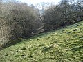 Meadow ant hills near Knill Wood - geograph.org.uk - 901576.jpg