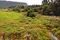 Meadow at Mink Mountain (227021646).jpg