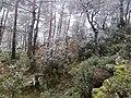Mesken dağındaki kar manzarası ( a. nazilli ) - panoramio.jpg