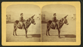 Mexican Burro, or Donkey, by Gurnsey, B. H. (Byron H.), 1833-1880.png