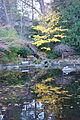 Meyer Memorial Lake - Lithia Park - Ashland, Oregon - DSC02671.JPG