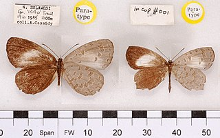 genus of insects