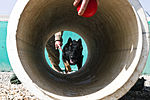Military working dog training 120308-A-XU607-010.jpg