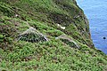 Mineshafts on the Clifftop - geograph.org.uk - 469300.jpg
