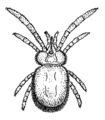 Mite (PSF).png