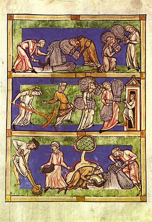"Speculum Virginum - Illustration of a ""harvest"" allegory, from a 13th-century manuscript. The ""Three Conditions of Woman"": the virgins who dedicated themselves to Christ are shown as harvesting ""hundredfold"", the pious widows harvest ""sixty-fold"", and the pious married wives harvest ""thirty-fold""."