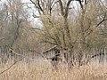 Mladenovo, 2013-12-01 - panoramio (2).jpg