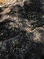 Moaña grabados de A Borna 2.jpg