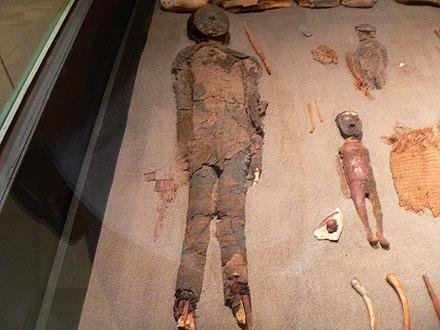 Momias de la Cultura Chinchorro.