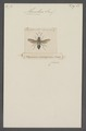 Monobia - Print - Iconographia Zoologica - Special Collections University of Amsterdam - UBAINV0274 044 02 0018.tif