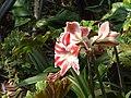 Monte Palace Tropical Garden DSCF0159 (4643133250).jpg