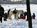 Moscow, Goliyanovo, Pond, Winter 06.jpg