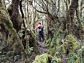 Mossy Forest at Mt Hamaguitan.jpg