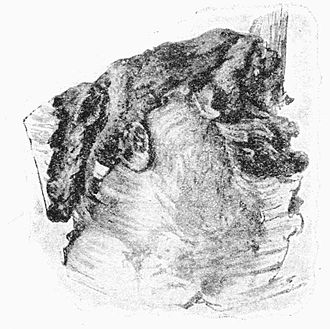Fig. 19. Cocoon of the Alder Kitten.