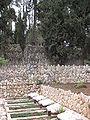 Mount Herzl - Independence War Plot IMG 1268.JPG