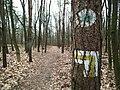 Mount Moraska trails (2).JPG