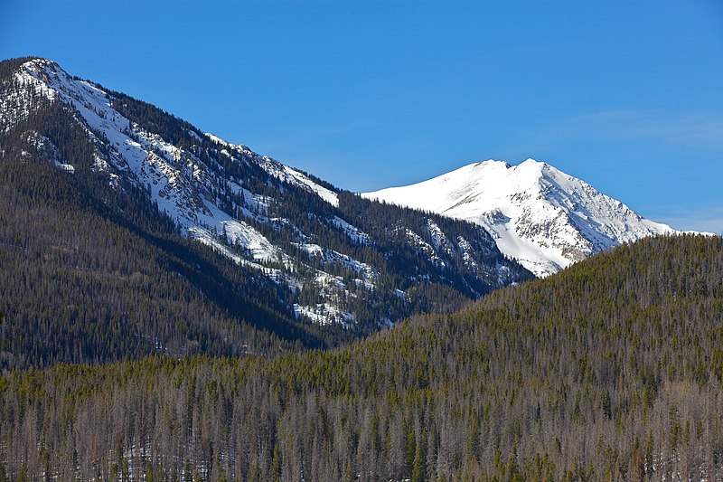 File:Mountain pine beetle damage in Rocky Mountain National Park.jpg