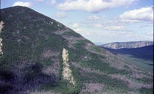 Mount Coe - Fir waves on Mount Coe