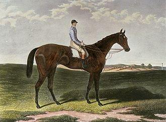 Musjid (horse) - Image: Musjid Derby winner