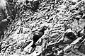 Mustjala pank. Siluri klint 74 (05).jpg