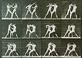 Muybridge, Eadweard (1830-1904) - Animal Locomotion - (1887).jpg
