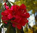 My Public Lands Roadtrip- O.H. Hinsdale Rhododendron Garden in Oregon (19070409496).jpg
