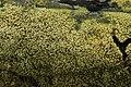 NSG Hiesfelder Wald 02.09.2017 Mushroom (37548038461).jpg