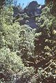 NSW061 Blue Mountains, near Katoomba circa1985 (32625967694).jpg