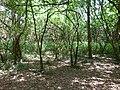 Nairobi Arboretum Park 27.JPG