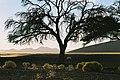 Namib Desert Vegetation.jpg