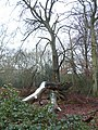 Naphill Common - geograph.org.uk - 103363.jpg