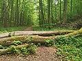 Nationalpark Hainich craulaer Kreuz 2020-06-03 26.jpg