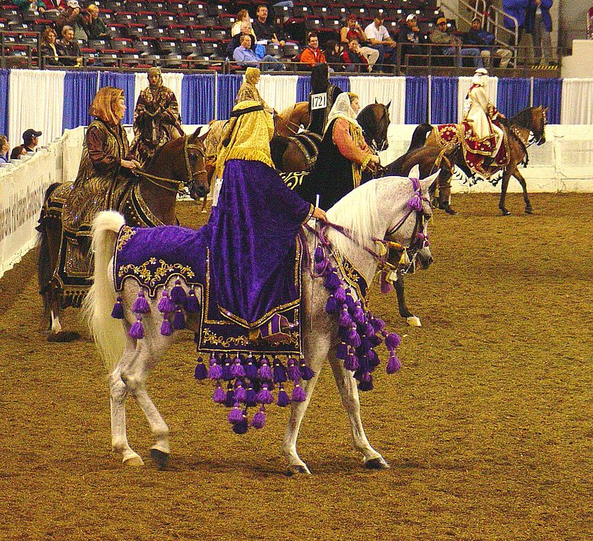 File:Native Arabian Costume Horse (2668749063).jpg ...