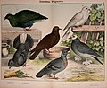Natural history of the animal kingdom for the use of young people (Plate XX) (5974952394).jpg