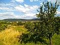 Naturschutzgebiet Federbachbruch - panoramio.jpg
