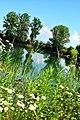 Naturschutzgebiet Rheinauen - panoramio.jpg