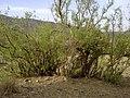 Navidhand Valley, Khyber Pakhtunkhwa, Pakistan - panoramio (150).jpg