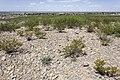 Near Beeman Canyon - Flickr - aspidoscelis.jpg