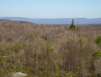 Negro Mountain - View west from Negro Mountain highpoint